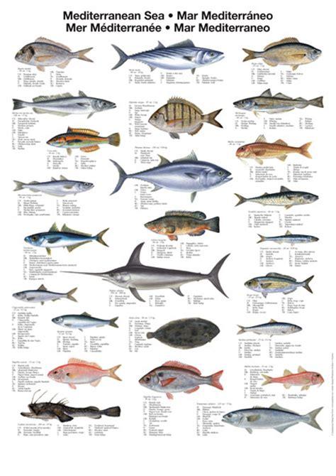 fish names