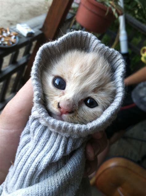 funny kitten pictures   time
