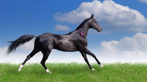 Hours Animal Wallpaper - racehorse wallpaper wallpapersafari