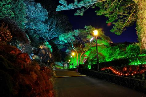 gardens roads  zealand wellington botanical night