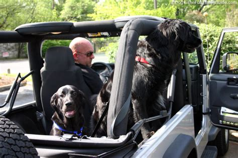 tips  dogs riding  cars jeeps fun times guide