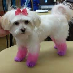 how much is a haircut at petsmart 1000 images about grooming stories on