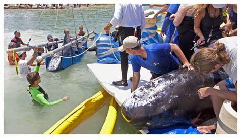 Melno delfīnu brīdinājums Ziemeļamerikas kontinentam (Foto ...