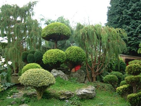 japanese garden plants designs famous plans source trees landscaping shrubs landscape bushes asian gardens japan oriental tree zen backyard planting