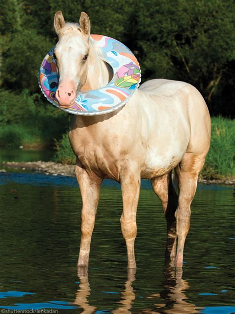 horse swimming go should horses mane water galloping imagine across horsechannel rider