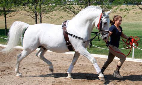 caballos blancos caracteristicas   donde vive