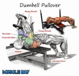 Flat Bench Vs Incline by Chest Exercises Dumbbell Pullovers Muscle Day