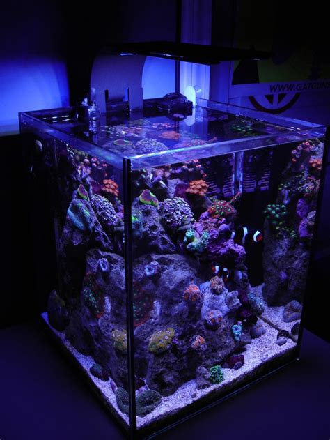 incredibly awesome ideas  beautify  home  aquariums