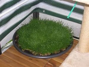 Welche Pflanzen Für Balkon : welche pflanzen auf balkon seite 5 katzen forum ~ Michelbontemps.com Haus und Dekorationen
