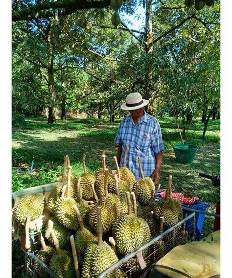 11 สวนทุเรียนปราจีนบุรี 2563 หวานมัน อร่อย มีบริการจัดส่ง ...