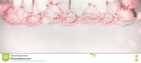 Pink Roses Panoramic Border With Bokeh Lighting And Faded