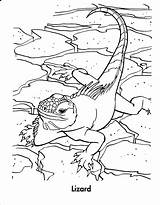 Coloring Reptiles Lizard Reptile Animals Amphibians Printable Lizards Google Animal Snake Coloringpages101 Chameleon Monkey Template Amphibian Olds sketch template