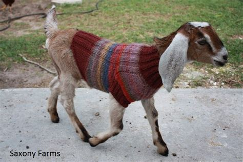 Twas The Day Of Ugly Christmas Sweaters On Cute Animals