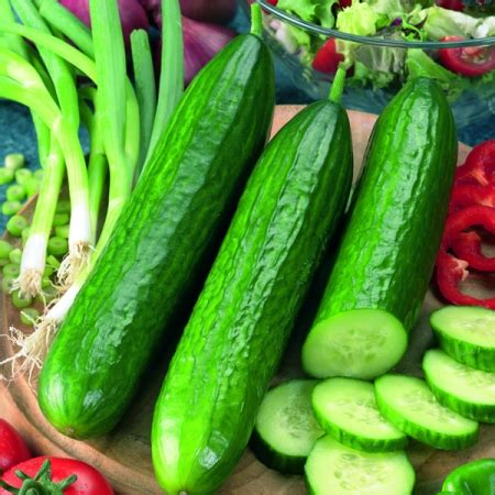 Mini Gurken Pflanzen by Mini Cucumber Socrates F1 Seeds Buy Cucumber Seeds