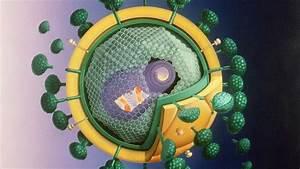 Spinnmilben Gefährlich Für Menschen : viren und bakterien sind f r menschen gef hrlich wo ist der unterschied gesundheit ~ Whattoseeinmadrid.com Haus und Dekorationen
