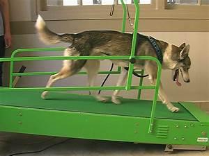 de la remise en forme pour les chiens With tapis de course pour chien