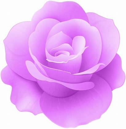 Rose Clip Flower Pink Purple Clipart Roses
