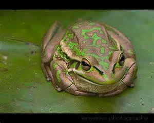 treknature finally i found a frog photo
