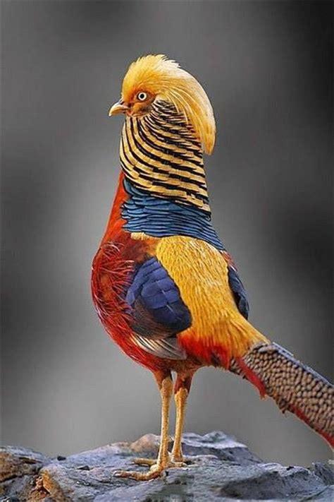 beautiful bird photography examples