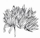 Bush Drawing Plant Line Shrub Draw Realistic Drawn Trees Drawings Google Bushes Plants Pencil Outline Tekening Untitled Ink Afkomstig Van sketch template