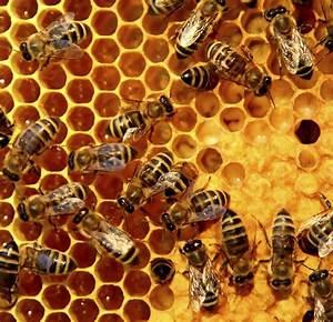 Beepower Honeycomb (350G Box)   Mudgee Honey Haven  Honeycomb