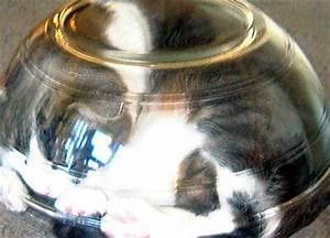 Bonsai Im Glas : bonsai kitten ~ Eleganceandgraceweddings.com Haus und Dekorationen