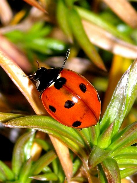 Großaufnahmen Von Insekten