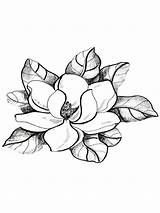 Magnolia Flower Coloring Drawing Tree Pages Flowers Sketch Tattoo Adult Outline Template Drawings Colors Stamps Colouring Printable Pattern Ms Peony sketch template