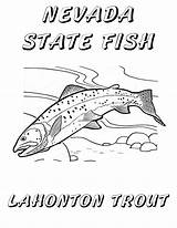 Trout Coloring Nevada Fish State Lake Cutthroat Tahoe Pages Lahontan Printable Windy Sheet Drawings Pinwheel Hull Christine Copyright Getdrawings Themed sketch template