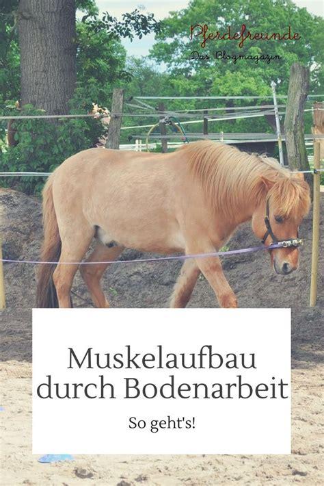 muskelaufbau beim pferd durch bodenarbeit pferde