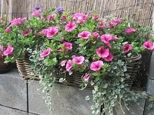 Blumenkübel Bepflanzen Sommer : die besten 25 blumenk sten bepflanzen ideen auf pinterest blumenk bel k belpflanzen und ~ Eleganceandgraceweddings.com Haus und Dekorationen