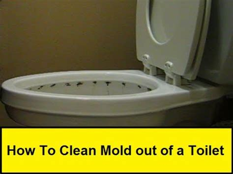 clean mold    toilet howtoloucom youtube