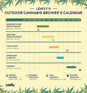 Growing Calendar For Outdoor Cannabis