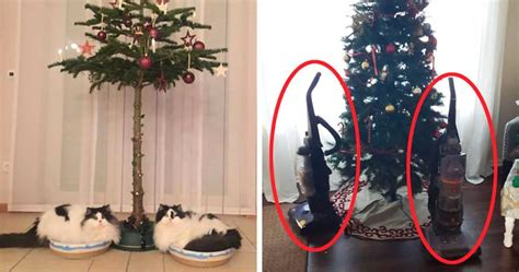 cat first seen christmas tree genius who found a way to protect their trees from cats and dogs