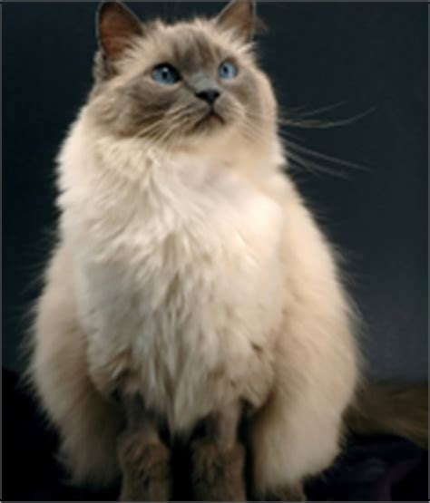 causes of cat hair loss excessive fur shedding