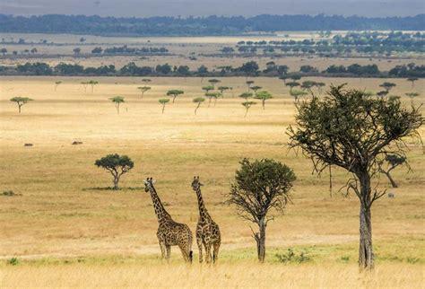 chambre ado vintage tableau girafe toile imprimée animaux de la savane