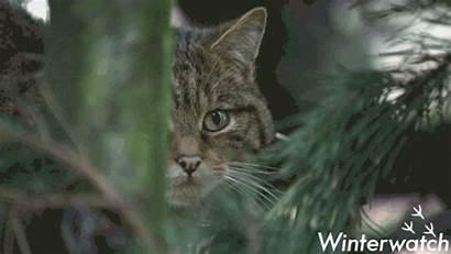 Bbc Giphy Gifs Earth Wildlife