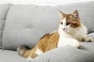 comment retirer les traces et les odeurs durine de chat With urine chat parquet