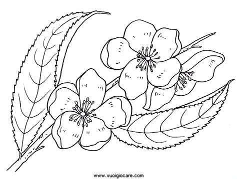 rami di fiori rami di fiori da colorare 28 images 21 carino