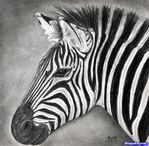 How To Draw A Zebra Draw A Realistic Zebra Step By Step