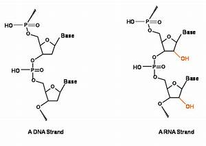 For Which Characteristics Is A Single Stranded Dna Called