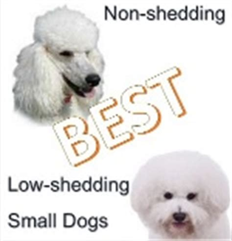 low shedding dogs small dogs