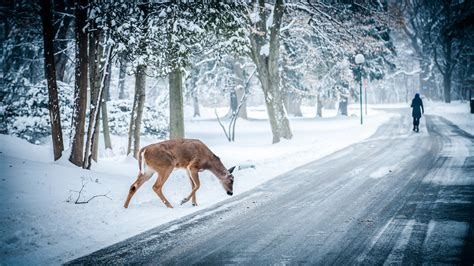 Free Winter Animal Wallpaper - winter snow wallpaper 183
