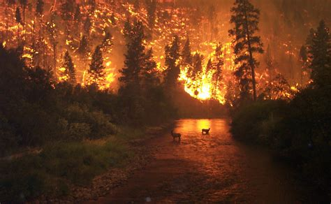 Spirit Halloween Colorado Springs by Deer In A Forest Fire Montana Pic Pics