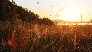 wheat field on Tumblr