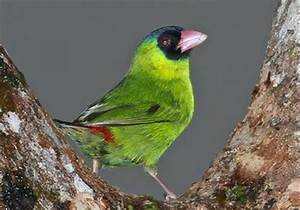 About, Bird, Watching, In, Fiji