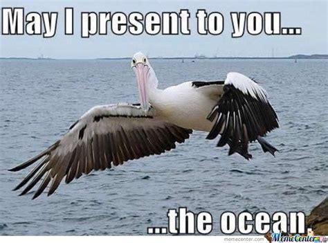 Ocean Memes - ladies and gentlemen the ocean by photoblip meme center