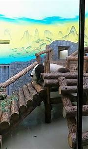 Moscow Zoo   360 Stories