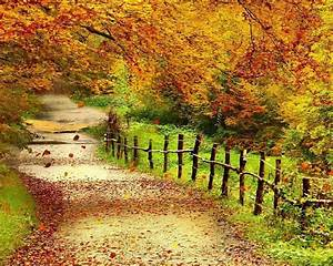 Beautiful Autumn Scenery Wallpapers Full Hd Wallpaper ...