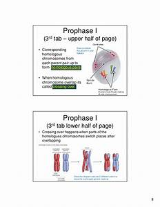 33 Diagram And Label A Chromosome In Prophase